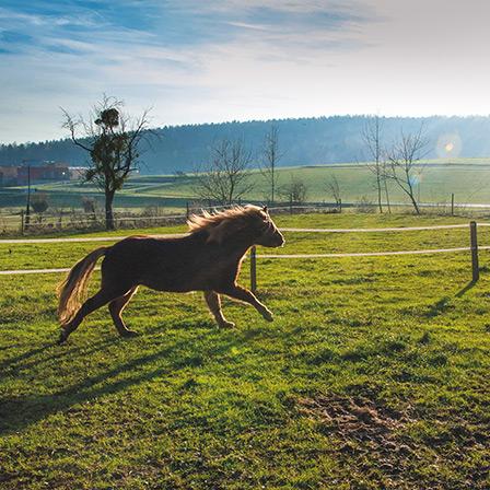 pferde_web